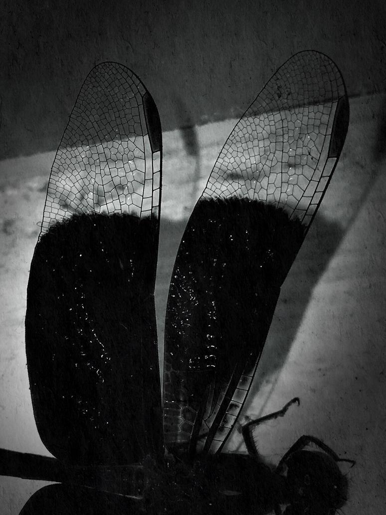 Black dragonfly by yozgt
