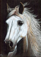 Horse portrait updated by Liaram