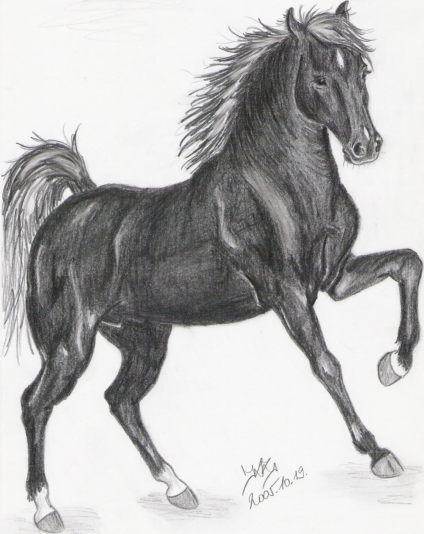 Black horse by Liaram on DeviantArt