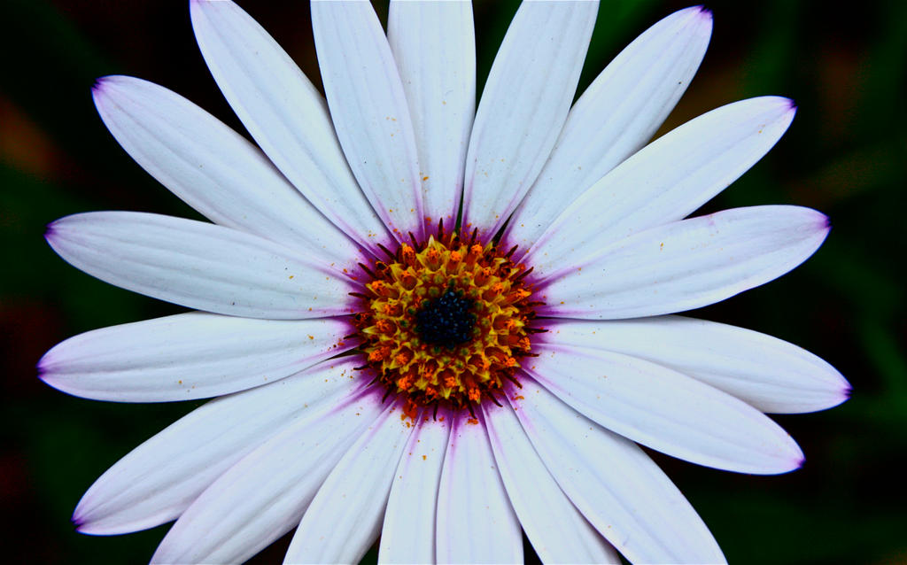 Flower macro by NightingaleCosplay