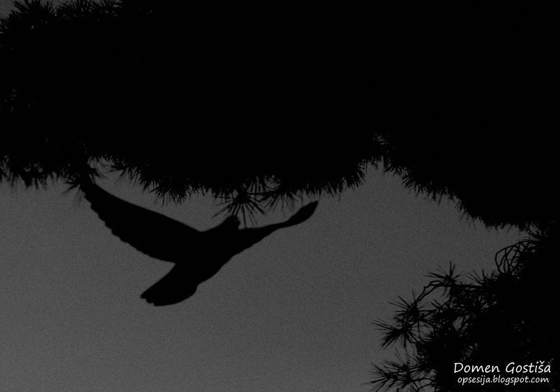 Dove by 2DoMeN2