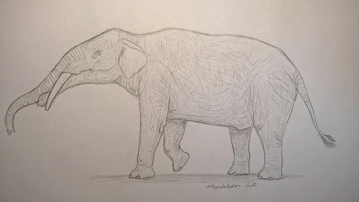 Megabelodon by CMIPalaeo