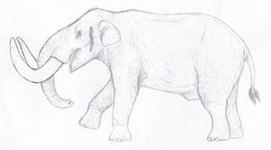 Pacific Mastodon