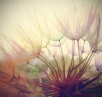 Fly away with me by SophiaKiryakova