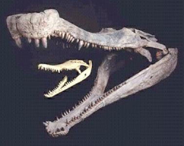 Sarcosuchus skull by Fyrekobra on DeviantArt