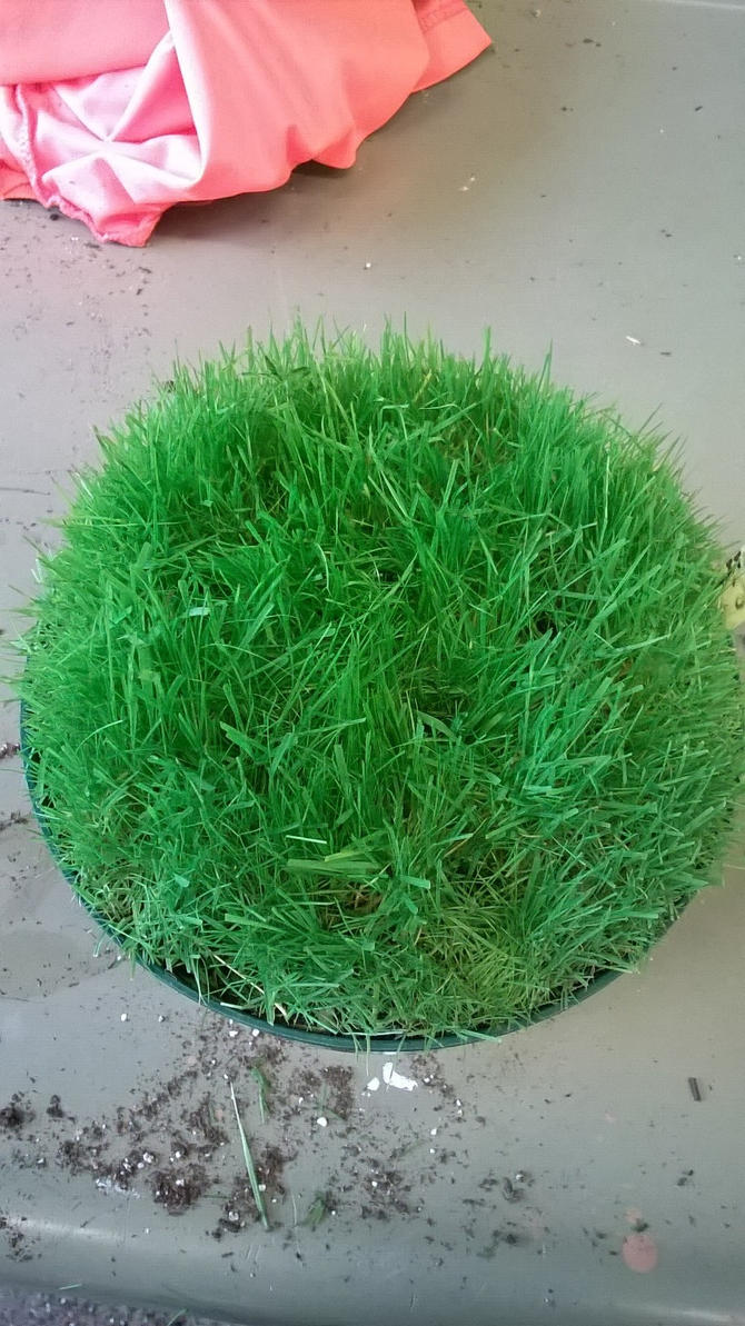 Grass Update Aerated by Caitybee
