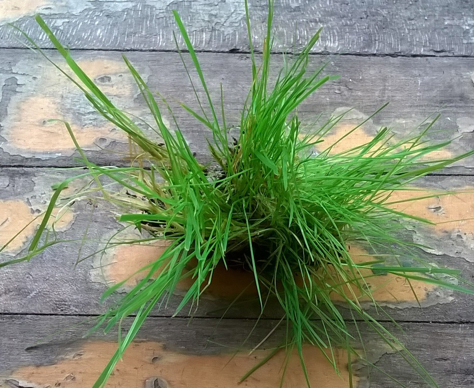 Grass Lab Chunk by Caitybee