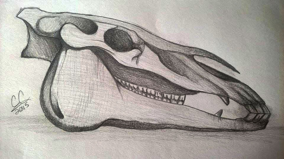 Horse Skull PC 1/6 by Caitybee