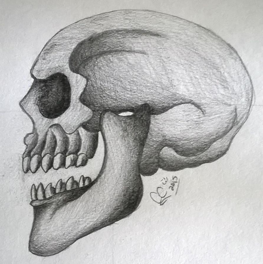 Human Skull by Caitybee