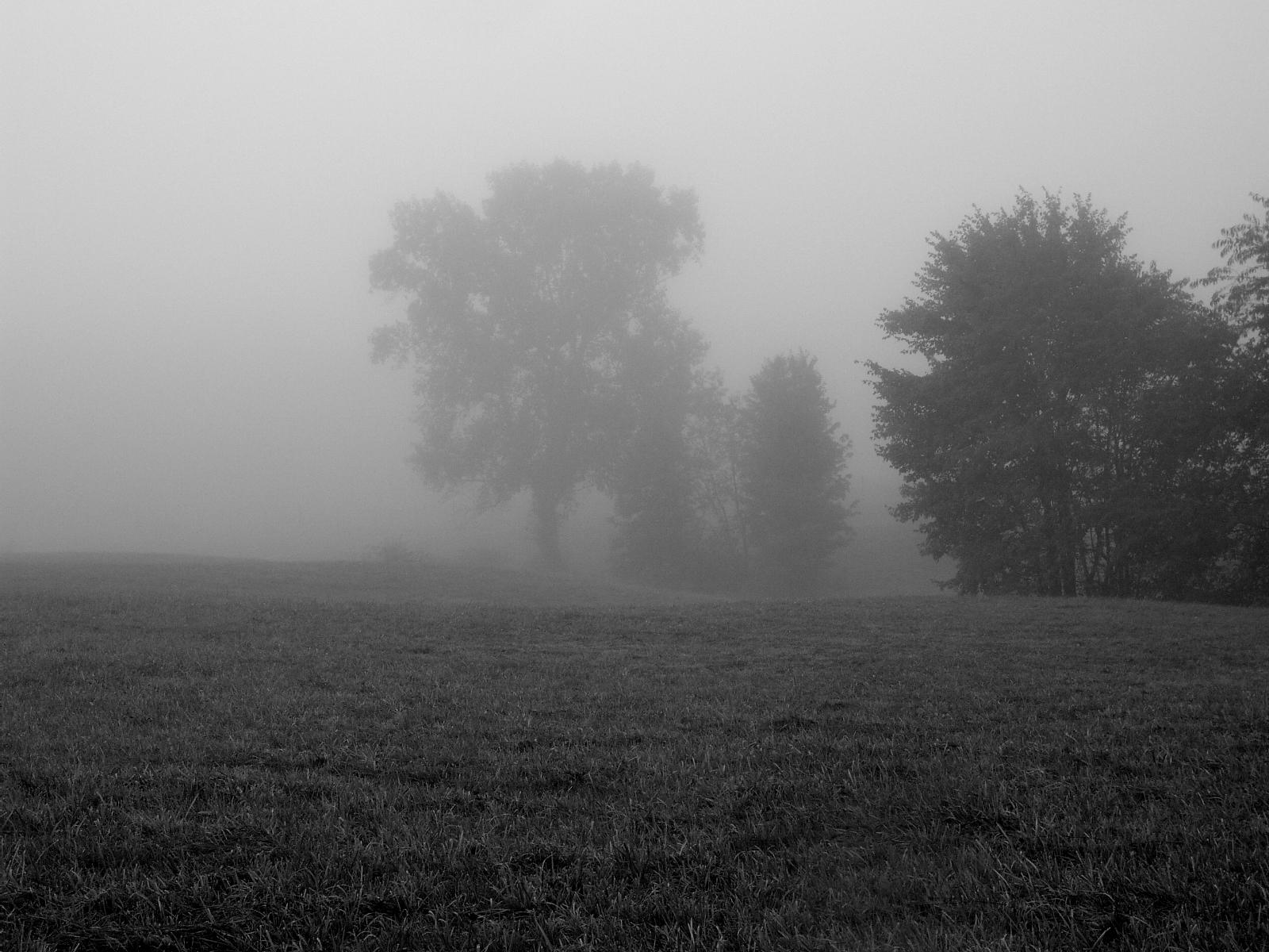 S.S. Foggy Scene - 1