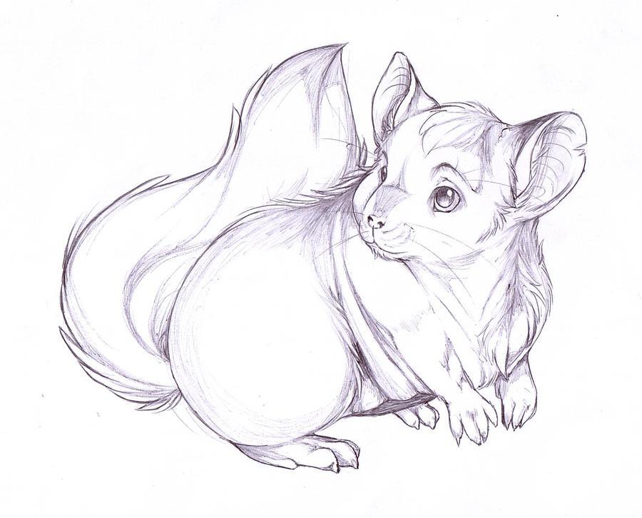 chinchilla pen sketch by chinchillatwork