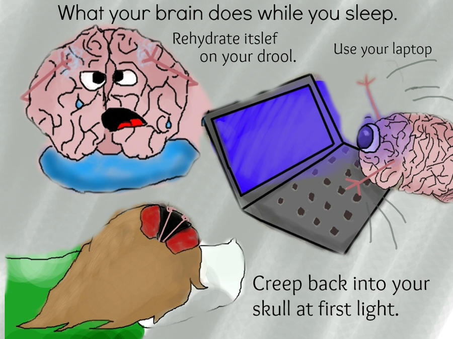 What does our brain do while sleeping