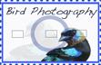 Bird Photography stamp by Marvtorrez