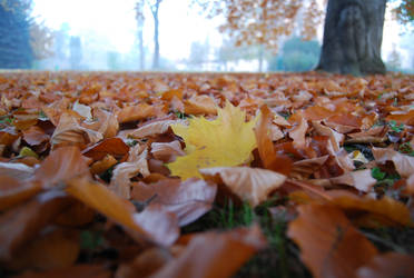 Maple leave I by Dorian-Gray7