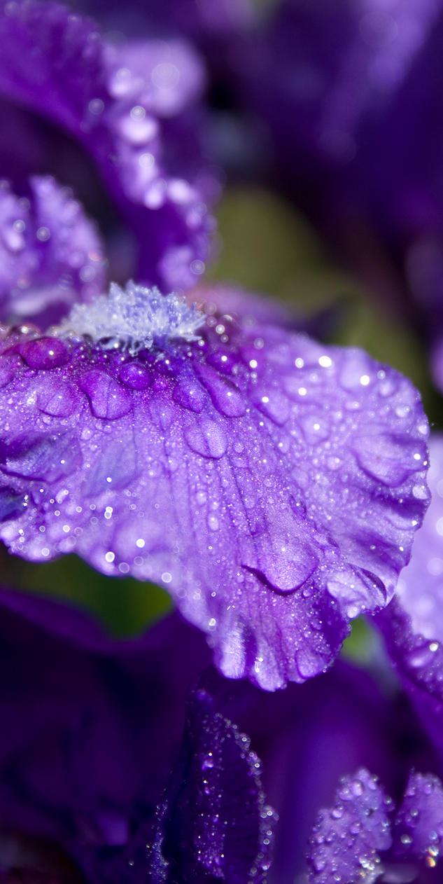 Petal Perfect Purple by JasunSweet