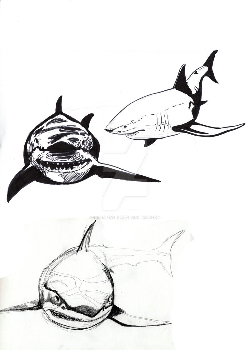 GW Shark prep BW studies by innerpeace1979 on DeviantArt