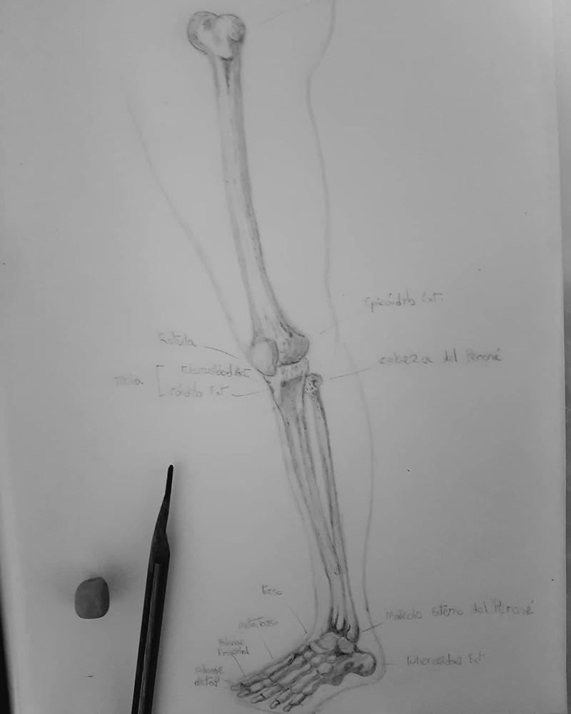 Huesos de la pierna by andre-88 on DeviantArt