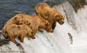 Family fishing. Grizzly by Terrise