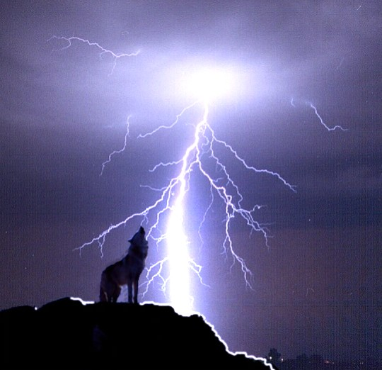 wolves and lightning wallpapers - photo #16