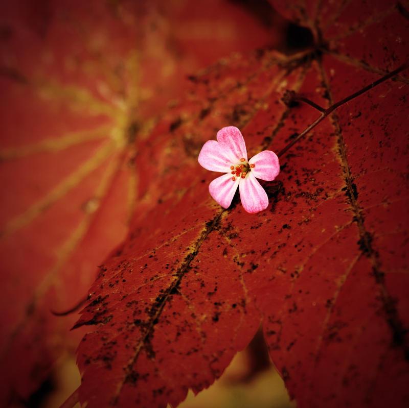 Autumn's Begun