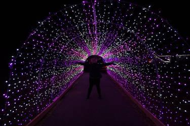 Purple Bridge by bowtiephotography
