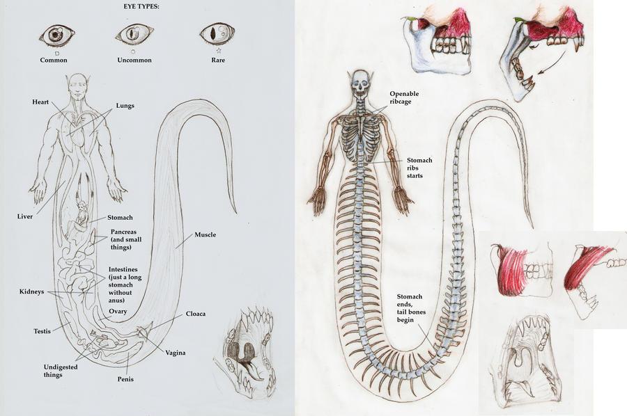 Nagah Serpentes anatomy 1 by Zanten on DeviantArt
