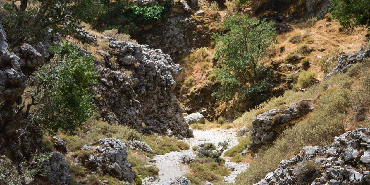 Rocky Path by Oansikt