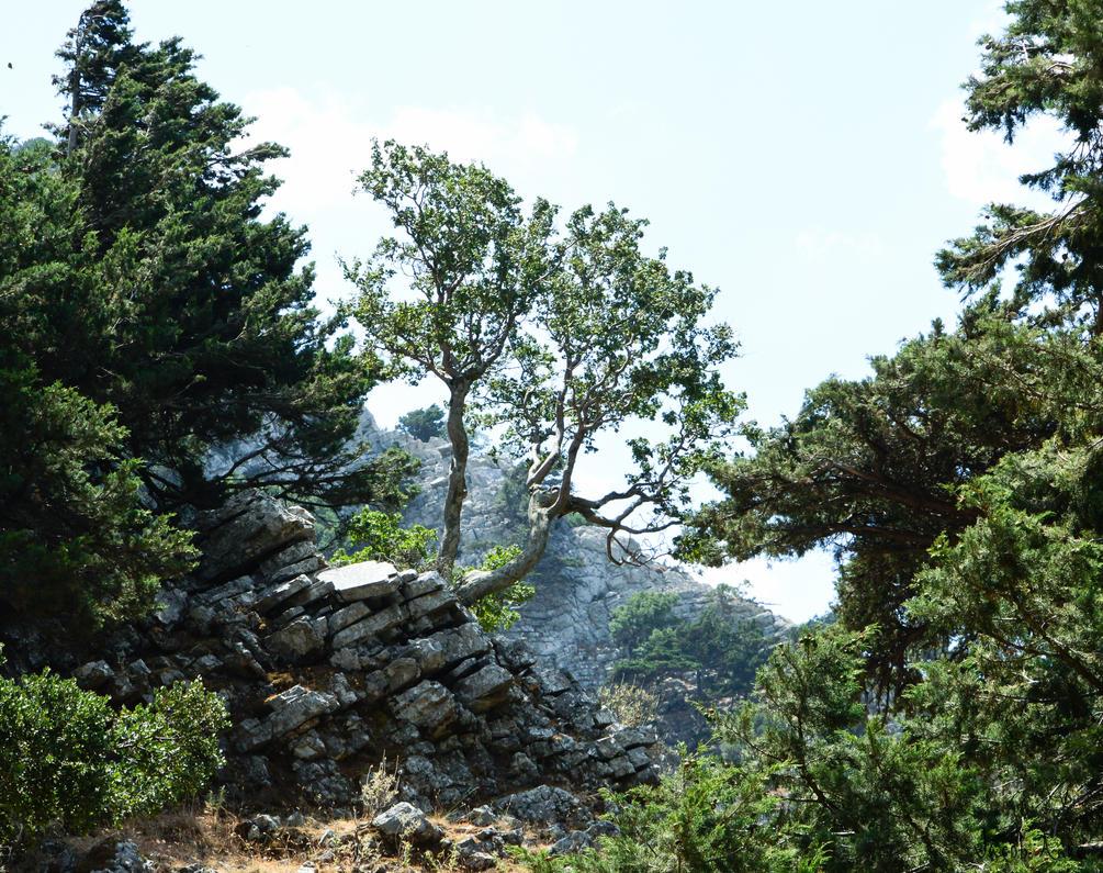 Scouting Tree by Oansikt