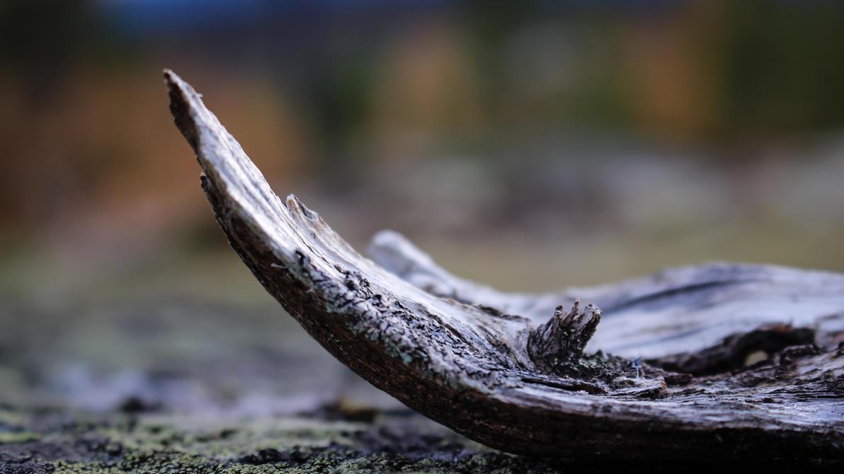 piece of wood 1 by Oansikt