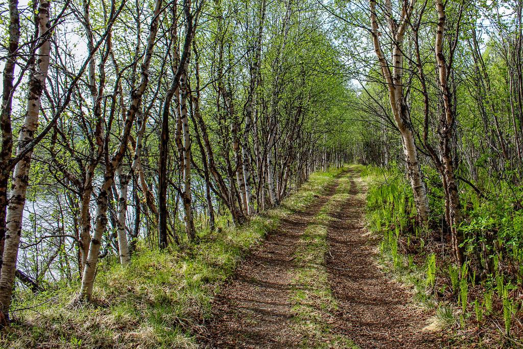 River Path by Oansikt