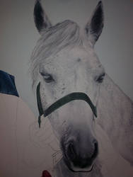 detail of a horse