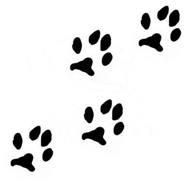 paw print trail transparent wwwpixsharkcom images
