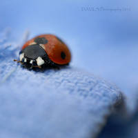 I've got the Blues by Davils-Photography