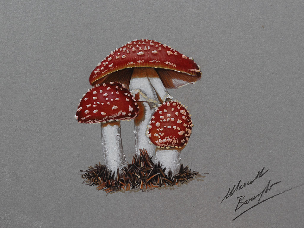 Acrylic Mushroom Paintings