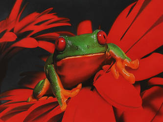 Red-eyed tree frog DRAWING by Marcello Barenghi by marcellobarenghi