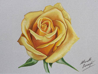Yellow rose DRAWING by Marcello Barenghi by marcellobarenghi
