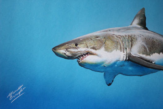 Cute shark on blue paper DRAWING Marcello Barenghi