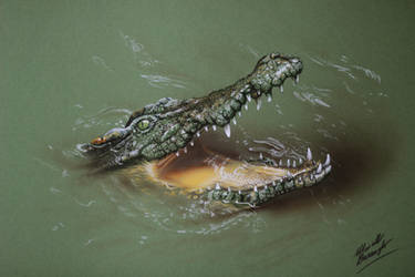 Cool Crocodile DRAWING by Marcello Barenghi by marcellobarenghi