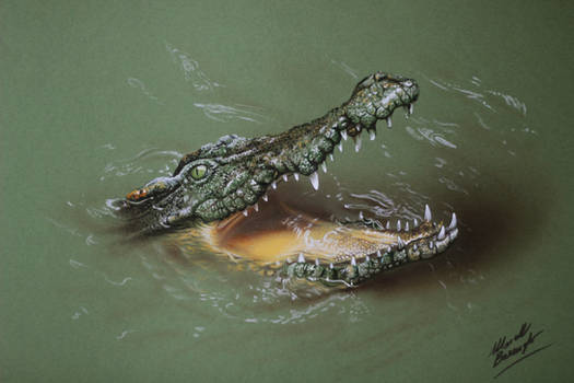 Cool Crocodile DRAWING by Marcello Barenghi