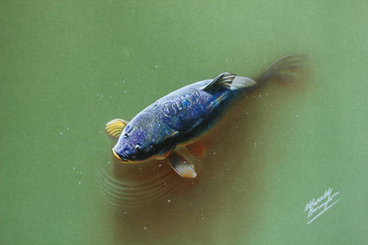 Colorful carp in the pond DRAWING