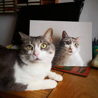 My drawing and the real cat by marcellobarenghi