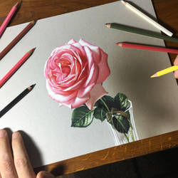 Drawing Rose Flower by marcellobarenghi