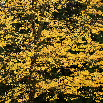 Overwhelmed by Yellow