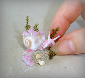 Miniature Sea snail