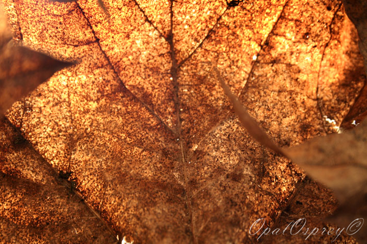 Close-Up Leaves by OpalOsprey