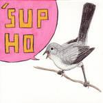 Bitches love birds