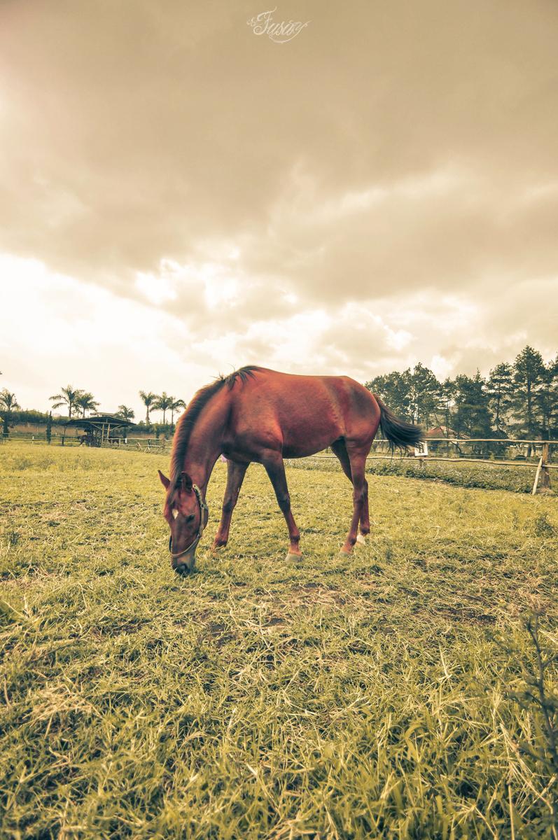 Horse by fusuyoflove