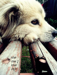 Linda - my sweet little dog by R0ckSy