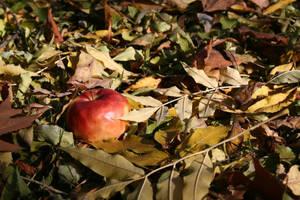 autumn apple by senner