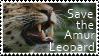 Save the Amur Leopard
